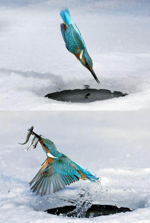 http://opticoverload.tumblr.com/post/27718606045/triple-kill-the-kingfisher-makes-a-perfect-dive