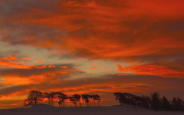 some trees and a sunrise by Master Pedda