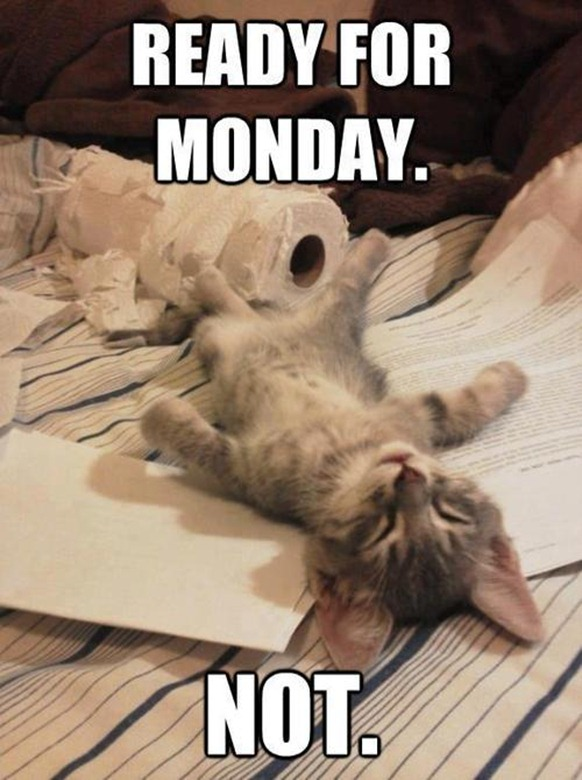 Ready For Monday - Funny - Cat - Humor