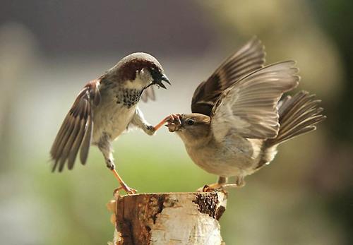 birds, courtesy, respect, shut up, be quiet, decency