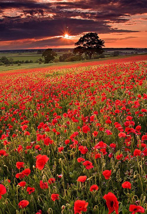 Remembrance Day, November 11, Veterans Day
