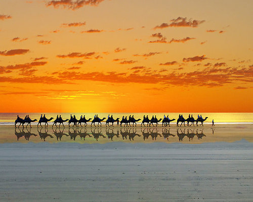 Walking on beach with camels and sunrise