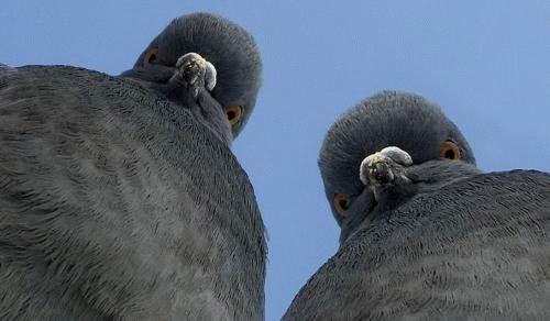 birds-penguins