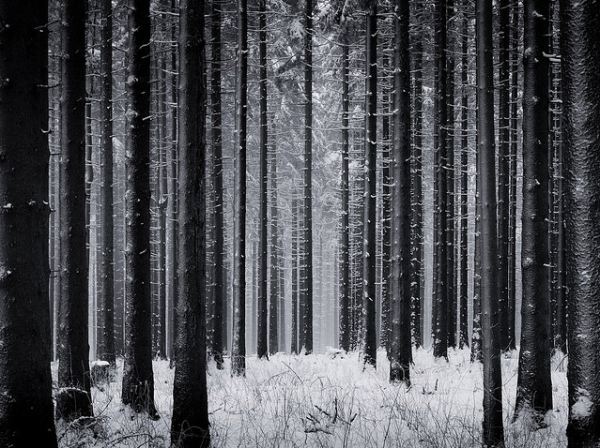 trees, woods, forest, winter, photography, black and white