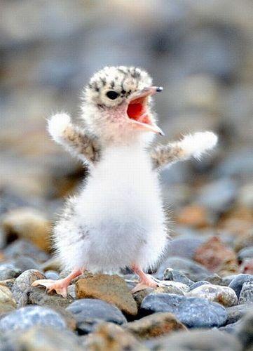 Bird, little bird, baby bird, cute, chirp