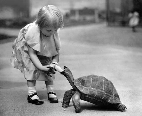 girl feeding turtle