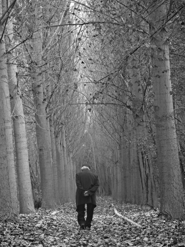 black and white photography, trees, woods, quotes,
