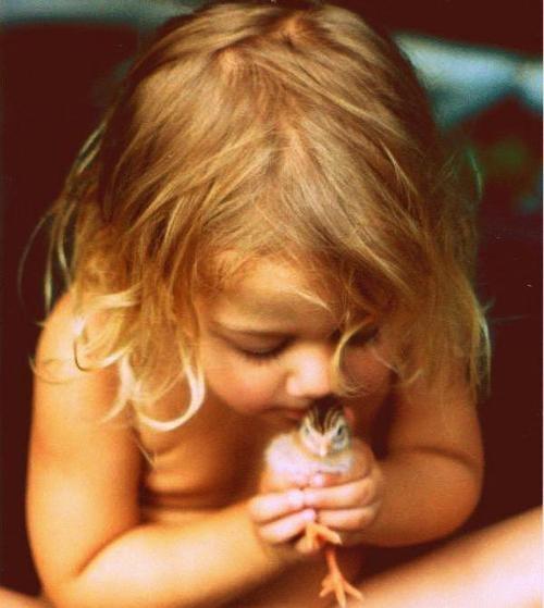 cute, photography, child, bird,chick