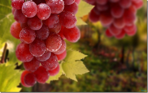 red_grapes_bunch-1920x1200