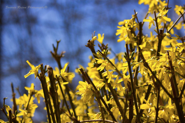 flower, bloom, photography,yellow