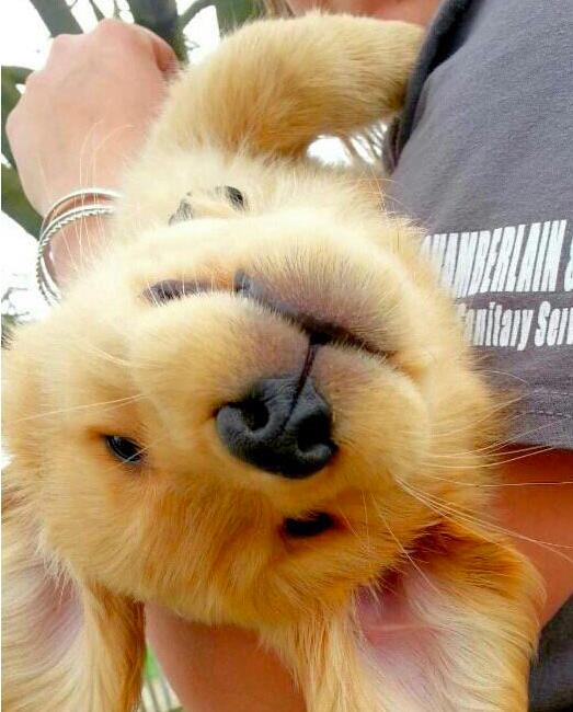 happy, joy, bliss,dog, cute,puppy