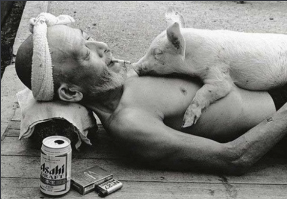 pig,man,black and white, photography,chill,rest