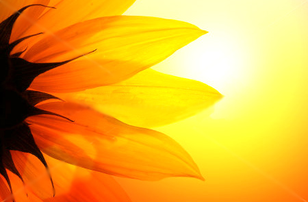 sun,light,sun light, flower,yellow