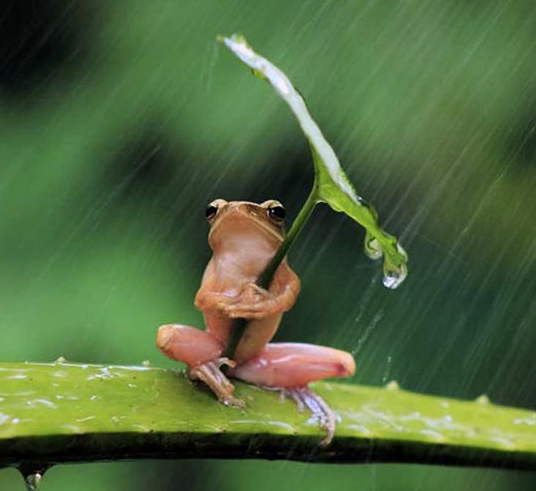 Dealing with Rainy Weather - Frog