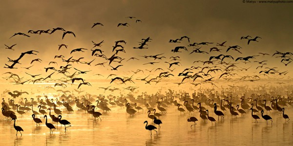 africa, nakuru,sunrise, flamingo,reflection,photography