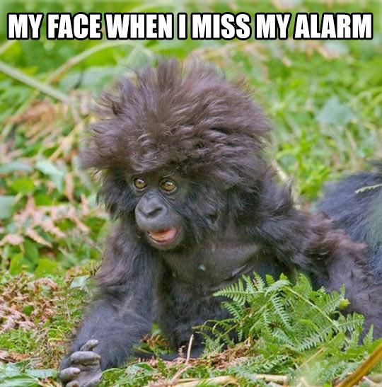 monday morning, alarm,funny,laugh, true