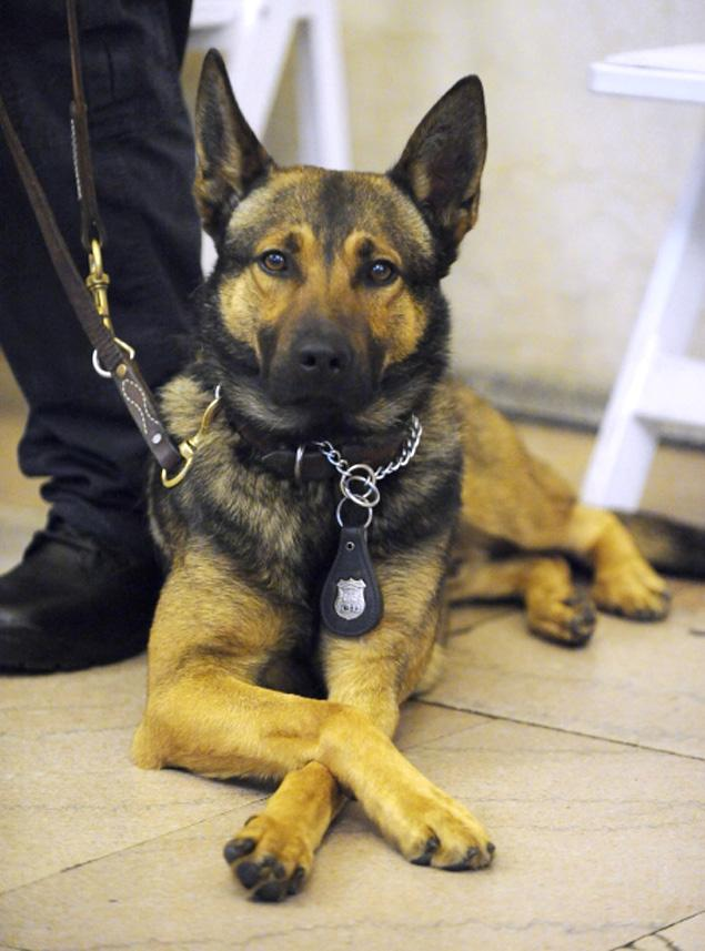 K9 police dog graduation - Glen