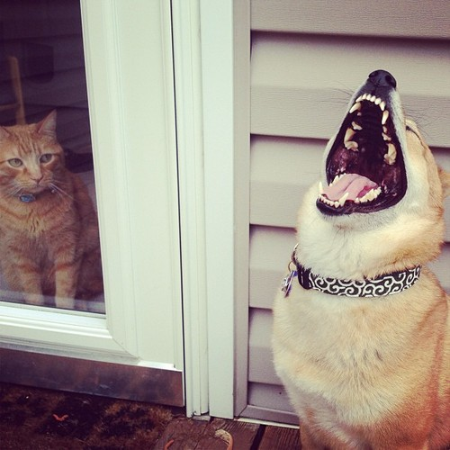 Laughing-animals-dog