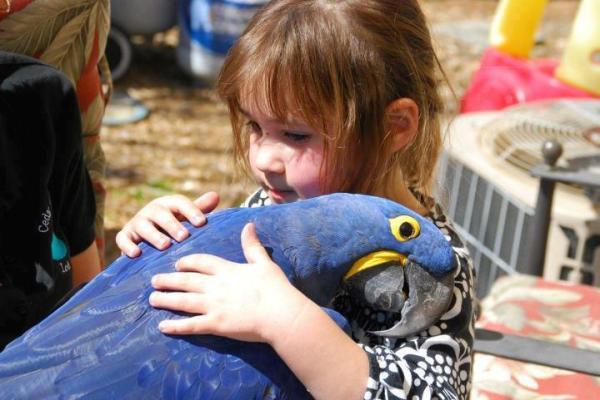 bird, tropical bird, cute, girl, child, hug