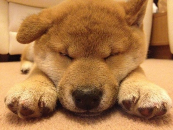 cute,photography, close-up. dog, sleepy