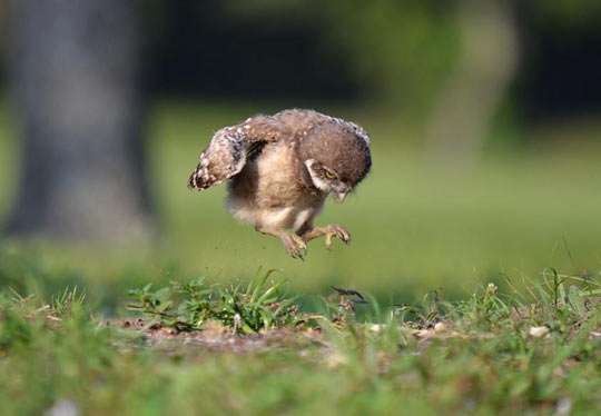 funny-little-owl-jump-baby