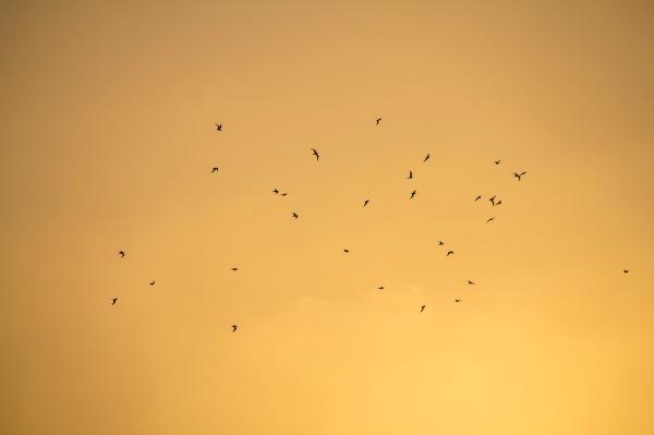 birds-sun-sky
