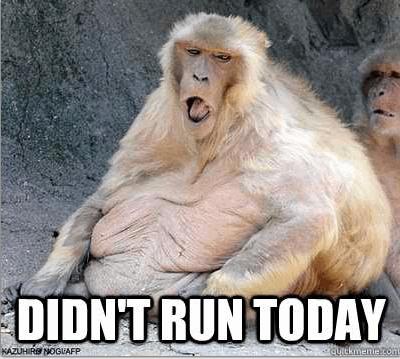 funny-ape-run-exercise-fat