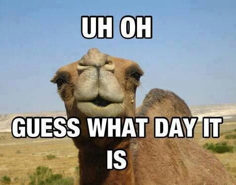 funny-camel-day-question