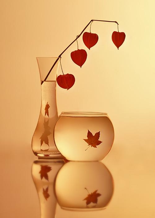 leaves, vase,light