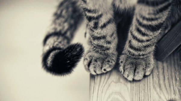 black-and-white-cat-paws-wallpaper