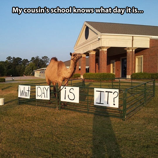 funny-camel-farm-hump-day