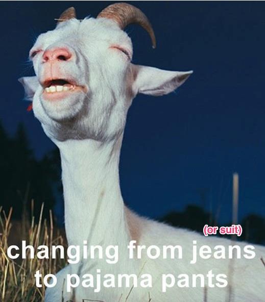 funny-goat-