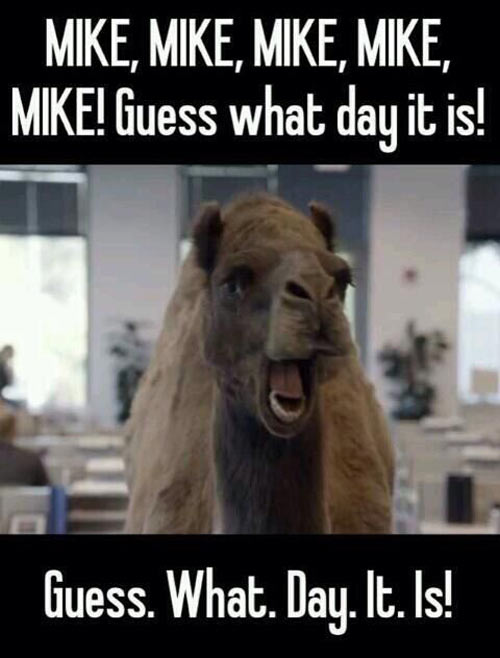 funny-hump-day-Mike