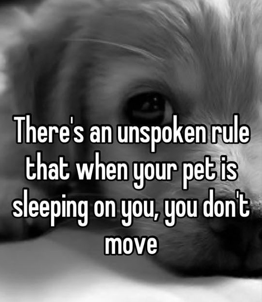 funny-true-pet-dog-sleeping