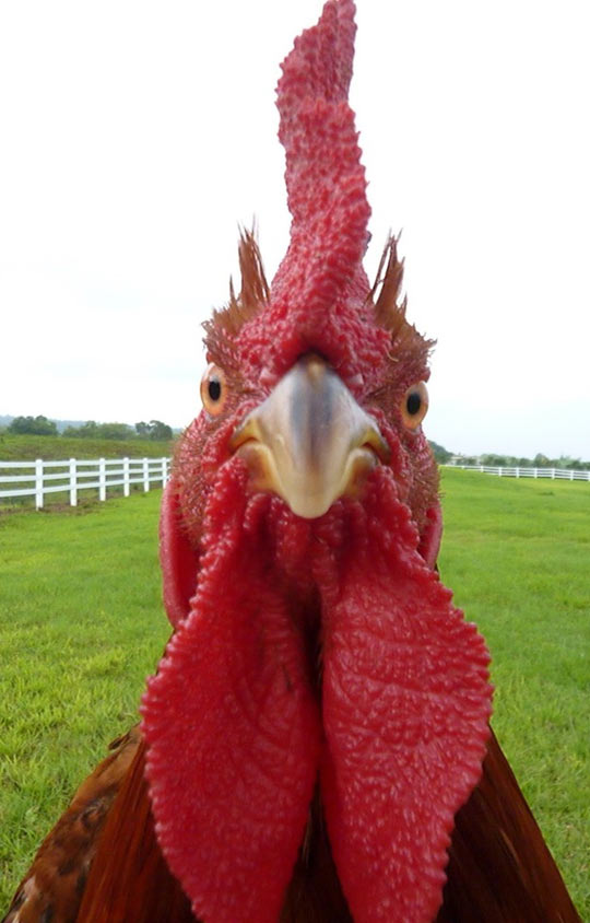 funny-turkey-picture-face-close-cool
