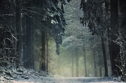 forest-mist-path-winter