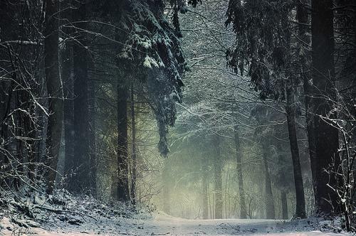 forest-mist-path-winter