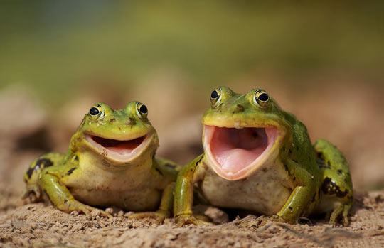happy,smile,cute