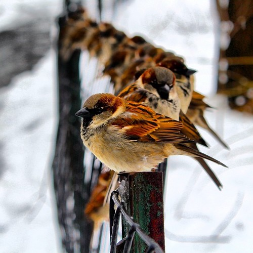bird,fence,cold,winter,huddled