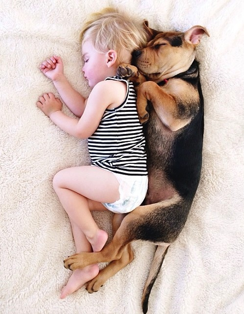 baby-dog-cute-sleep