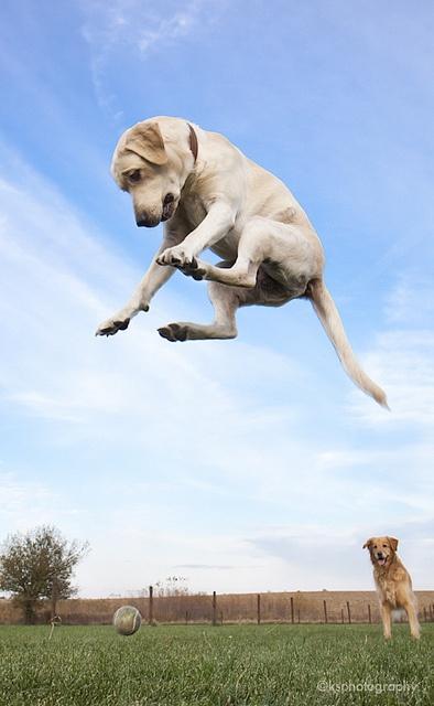 Dog-ball-funny-jump