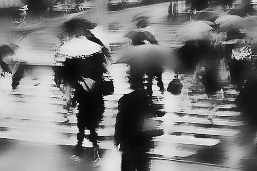 photography,black and white,umbrella,street