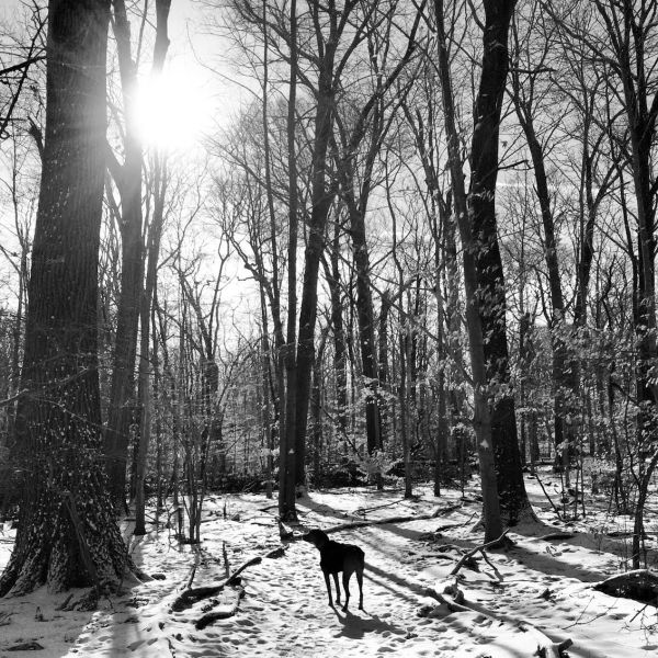 photography,black and white,dog,trail,Connecticut,