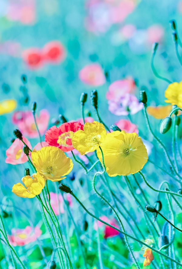 flowers, spring,yellow