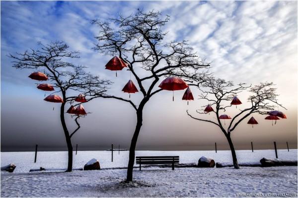 rainblossom,vancouver,red,umbrella