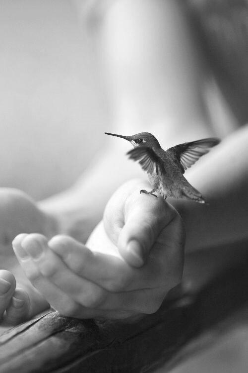 bird-in-hand