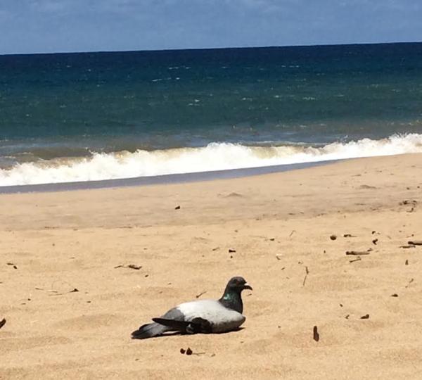 pigeon-beach-maui