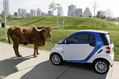 smart-car-longhorn