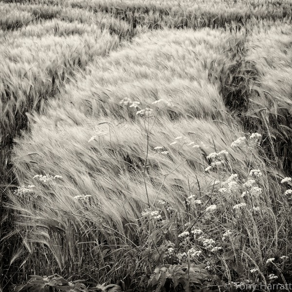 breeze, France,