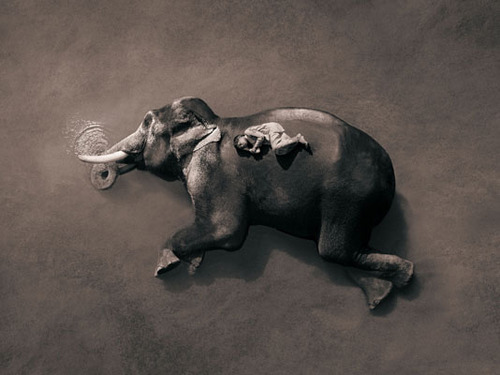 gregory-colbert-elephant